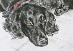 01 zwarte hond